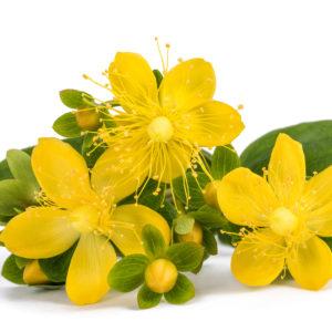 Fleurs de Millepertuis, huile végétale de Millepertuis, St. John's wort : Coups de soleil, Brûlures