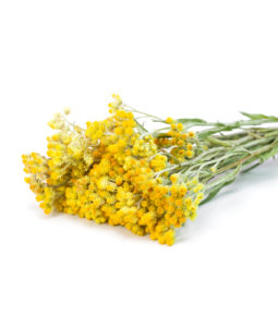 Helichryse Italienne, Immortelle. anti hématome Huile Essentielle Indispensable